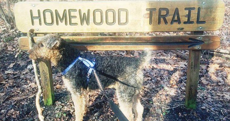 Exploring the Homewood Trail