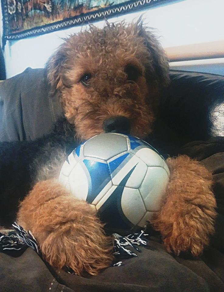 Ball Handler