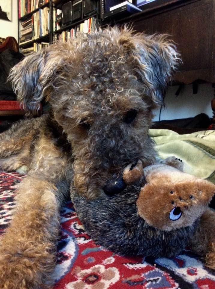 Stuffie Evisceration